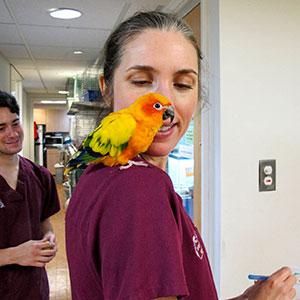 Wild patients