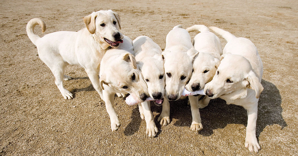 Should You Clone Your Dog? Biology Article for Students | Scholastic
